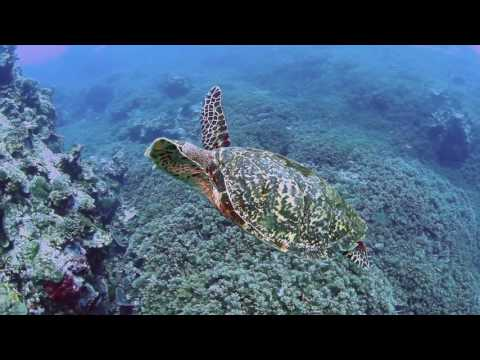 Banda-Neira Dive Trip - October 2016