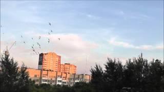 Стрижи нарезают круги (видео + фото)(Полет стрижей по круговой траектории. Скорости этих птиц позавидует любой авиамоделист :-), 2012-07-11T08:01:56.000Z)