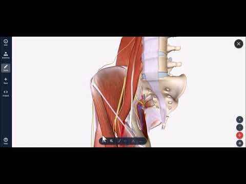 Ultrasound Guided Lateral Femoral Cutaneous Nerve (LFCN) Hydrodissectionиз YouTube · Длительность: 41 с
