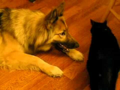 cat and dog love hate relationship pictures