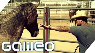 Cowboys hinter Gittern: Amerikas ungewöhnlichstes Gefängnis   Galileo   ProSieben