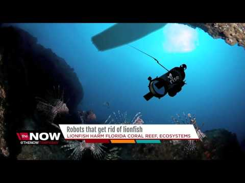 New robots can get rid of lionfish