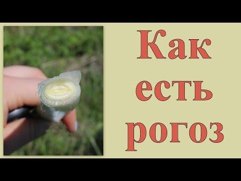 сныть – трава, которой питался Серафим Саровский