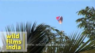 Paragliding : A must to do while in Goa