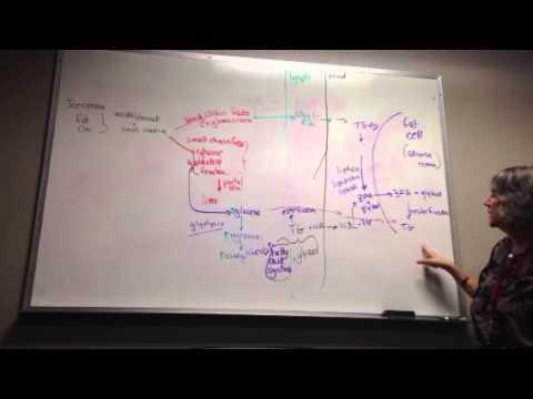 Exercise Biochemistry Flow Chart Explained Youtube