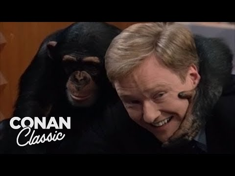 "Animal Expert Jarod Miller: Fennec Fox & Chimpanzee - ""Late Night With Conan O&39;Brien"""