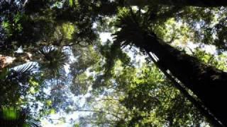 Schmoov! - Canopy