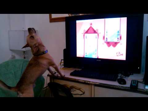 Adorable Dog Singing to his Favorite Cartoon