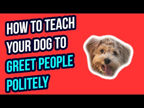 HOW TO TEACH YOUR DOG TO GREET PEOPLE POLITELY
