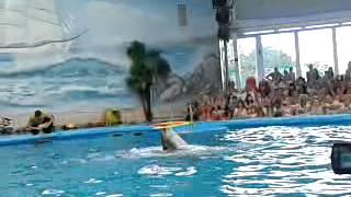Минский дельфинарий часть 4(Это видео загружено с телефона Android., 2014-02-11T17:05:05.000Z)