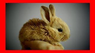 الموسيقى والاسترخاء للأرانب & الأرانب (5 ساعات) █ مهدئا تهدئة الأرنب الموسيقى على الحيوانات الأليفة و الحيوانات