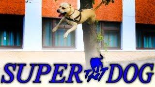 Tret - Super Dog