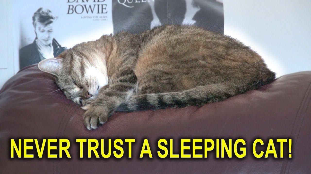 Never Trust A Sleeping Cat!