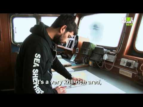 Whale Wars S07E02 Fight to the Death
