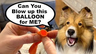 'Can You Blow this BALLOON for ME?'   MOTHER'S DAY Edition ❤❤ Another Biscuit Talky Compilation