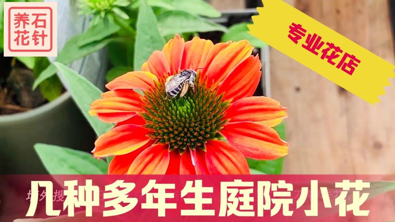 专业花店的特色多年生草本植物 - 老鹳草Hardy Geranium, 薰衣草Lavendar, 紫锥花Coneflower, 玉簪Hosta, 落新妇Astible chinensis -特点、价格