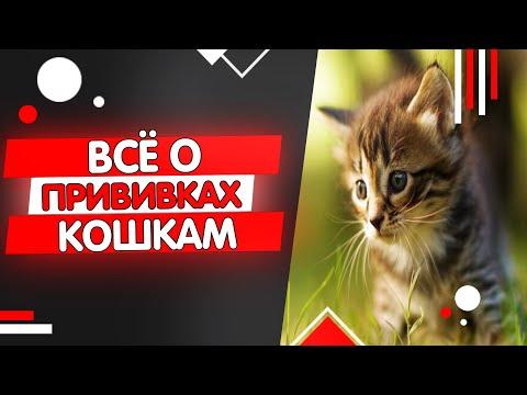Вопрос: Для чего ветеринар перед кастрацией кота посоветовал поставить прививки?