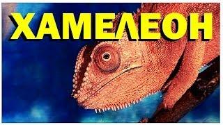 Галилео. Хамелеон