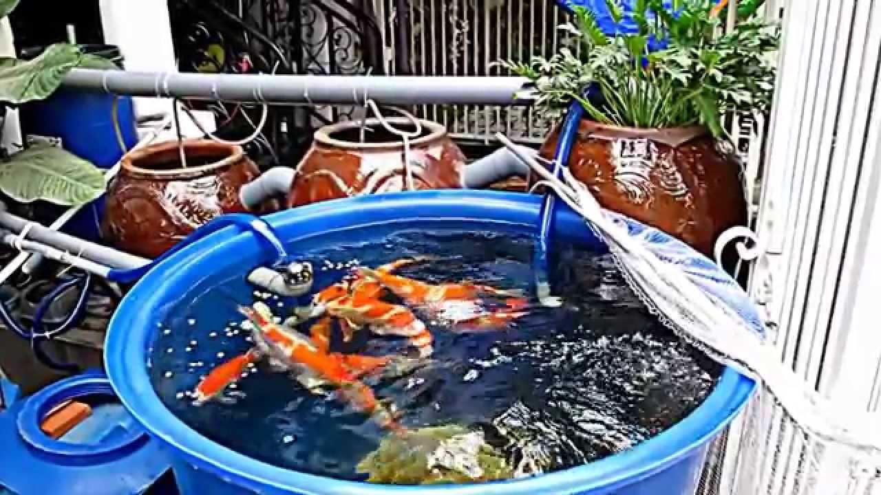 H c koi youtube for Koi pond removal