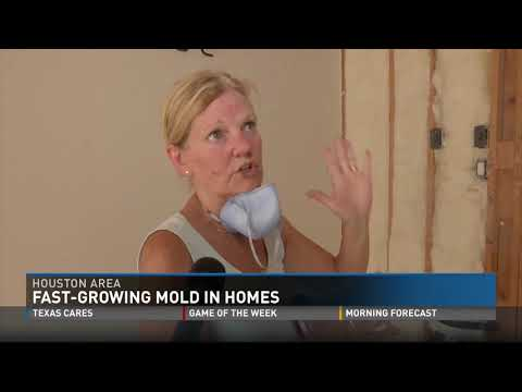 Fast-Growing Mold in Homes in Houston Area Hurricane Aftermath