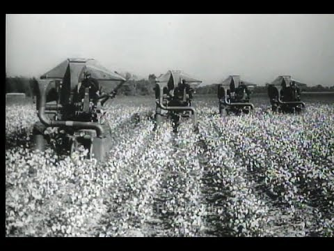 HD Historic Archival Stock Footage Cotton Picking Machines