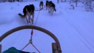 フィンランド 犬ぞり2.