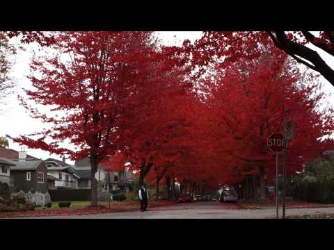 Cambridge Street - Red Autumn Leaves in Vancouver