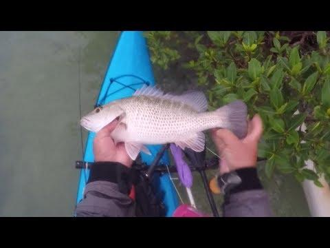 Key West Creek Fishing