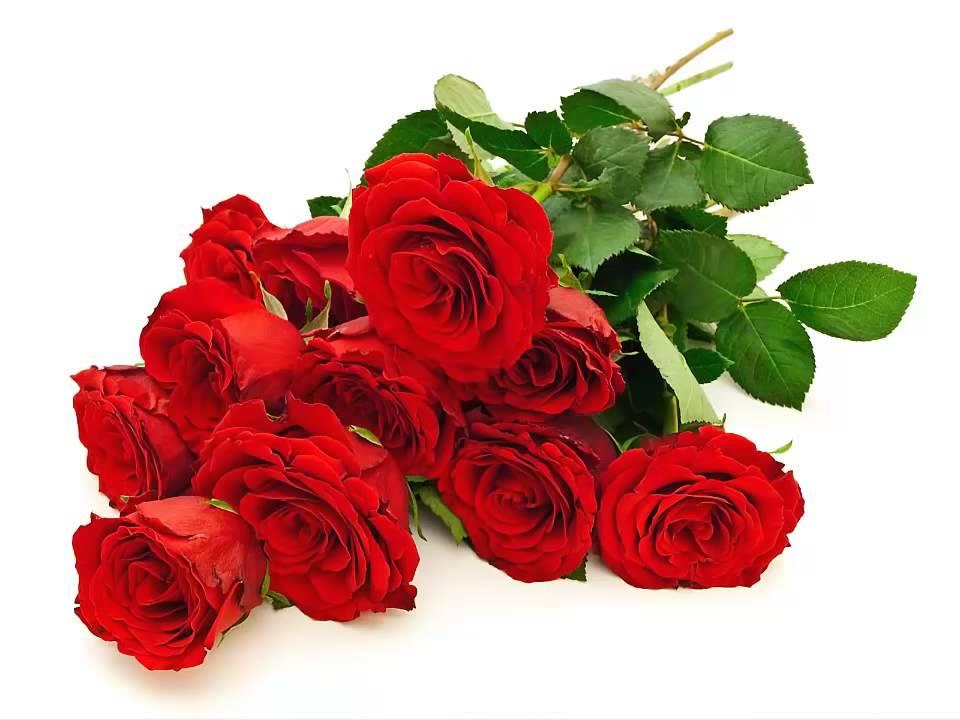 ramos de flores rojas