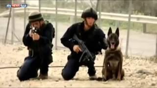 فيديو| مطالبات فلسطينية لهولندا بوقف تصدير الكلاب لإسرائيل