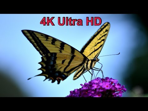 Amazing Butterfly Video with Stunning Music - 4k ultra HD