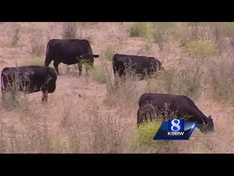 Clint Eastwood donates 79 acres to Big Sur Land Trust