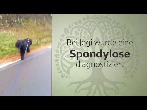 spondylose-beim-hund---cbd-&-artridonum-h-|-jogi-bär´s-erfahrungen