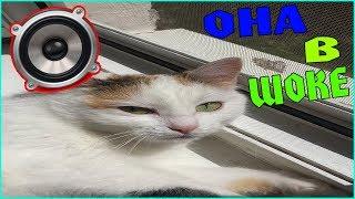 Реакция Кошки на Мяукание Котов