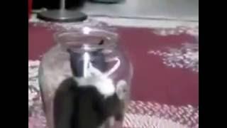 Кот атакует собаку из банки)