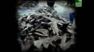 Shark fins trade: undercover from