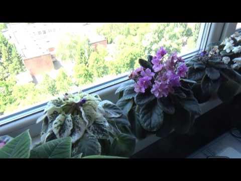 Вопрос: Нужно ли прикрывать осенью цветы от солнца на окне?