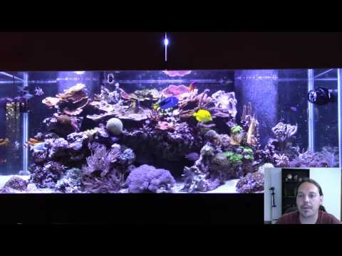 How I Dealt With Ich Without Medication In My Reef Tank.