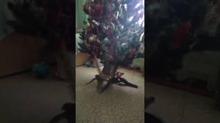 Веселый кот персей