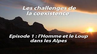 Les challenges de la coexistence : l'Homme et le Loup dans les Alpes #épisode 1