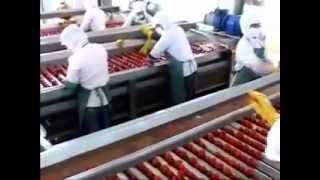 Tomato paste film
