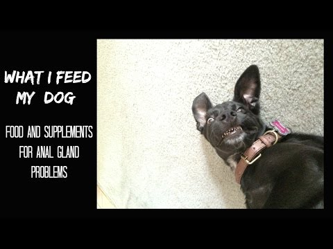 What I Feed My Dog! Food for Dogs with Anal Gland Issues