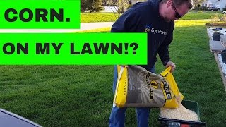 Using cracked corn to prevent lawn disease