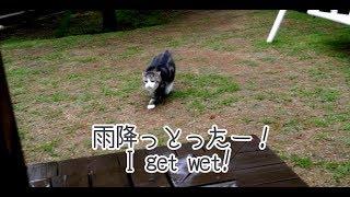 雨とまる- Maru of the rainy day.-