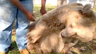 熊は男性に気づいた。その後の熊の反応がみんなの心を揺さぶる