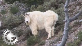 Utah Mountain Goat Muzzleloader Kill Shot - Long Range Hunting