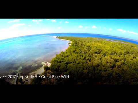 Belize • 2017 • episode 5 • Great Blue Wild