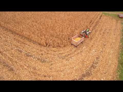 Antique Harvest