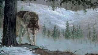 Слова старого волка и охотника чеченца