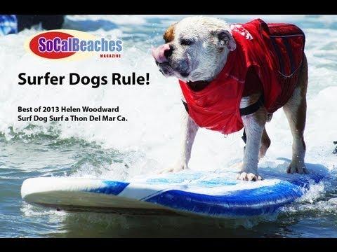 Best Surfer Dog Rides 2013 Helen Woodward Surf Dog